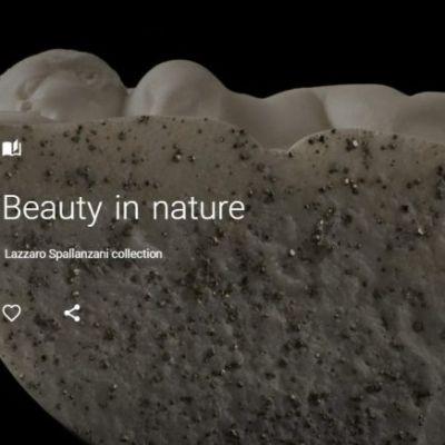 beauty-eng-1-480x436