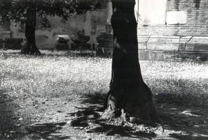 Stanislao Farri 25
