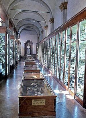 Museo Chierici – Vetrine