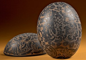 Noce di cocco incisa, collezione Spallanzani