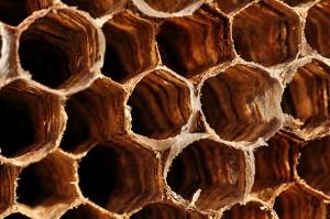 Favo di vespe