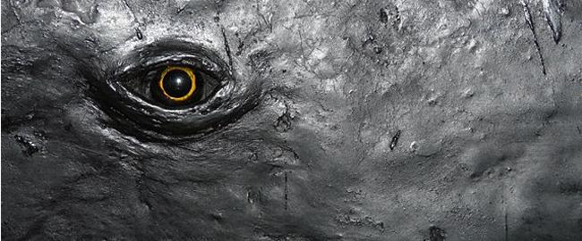 1 - Occhio di balena