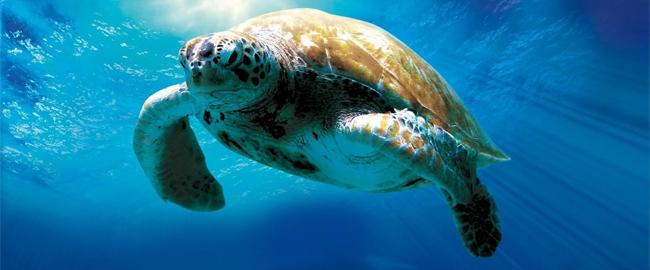 l incredibile viaggio della tartaruga