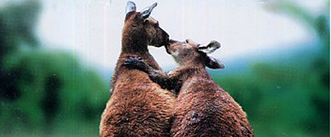 05-animals-in-love