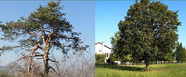22--10-alberi_museo-650px