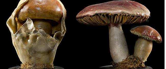 03-funghi_650px
