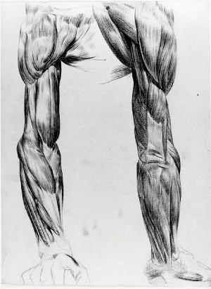 Domenico Pellizzi – Studio anatomico di braccia