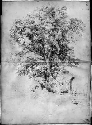 Giovanni Fontanesi – Studio di albero